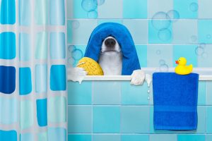 3 Best Dog Shampoos For Odor