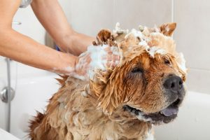 Do dog shampoos expire?
