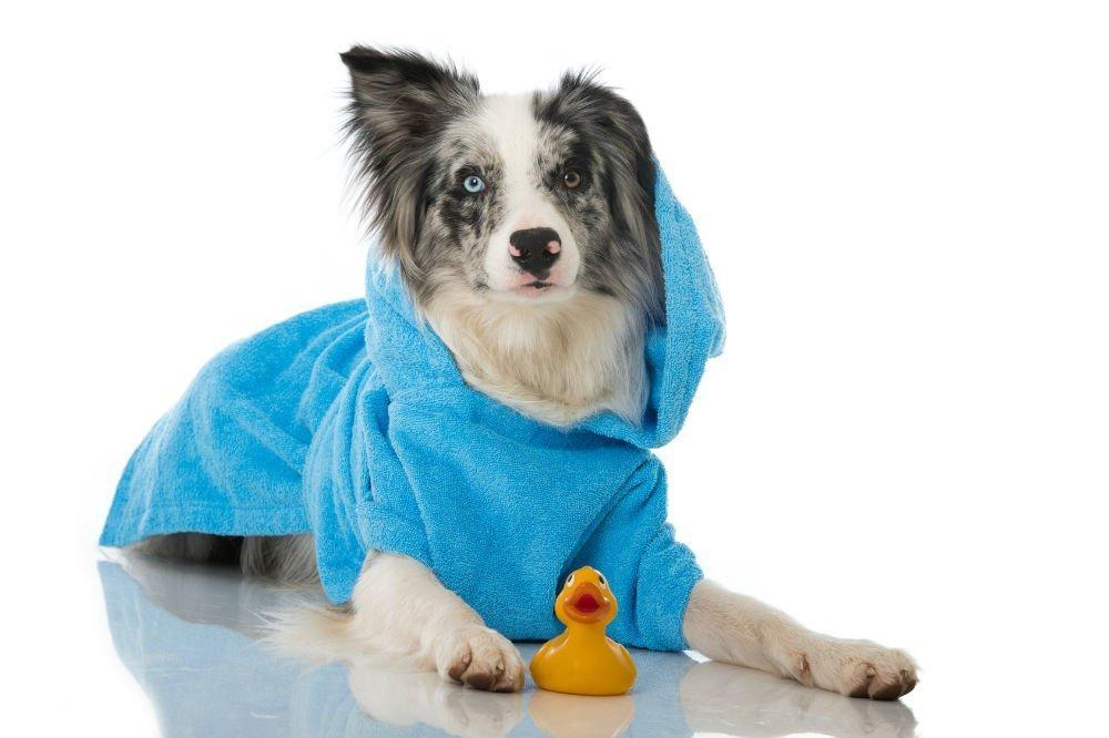 Does Dog Shampoo Work