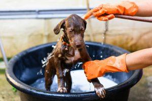 Douxo Chlorhexidine PS Shampoo – A Medicated Shampoo For Your Dog's Skin