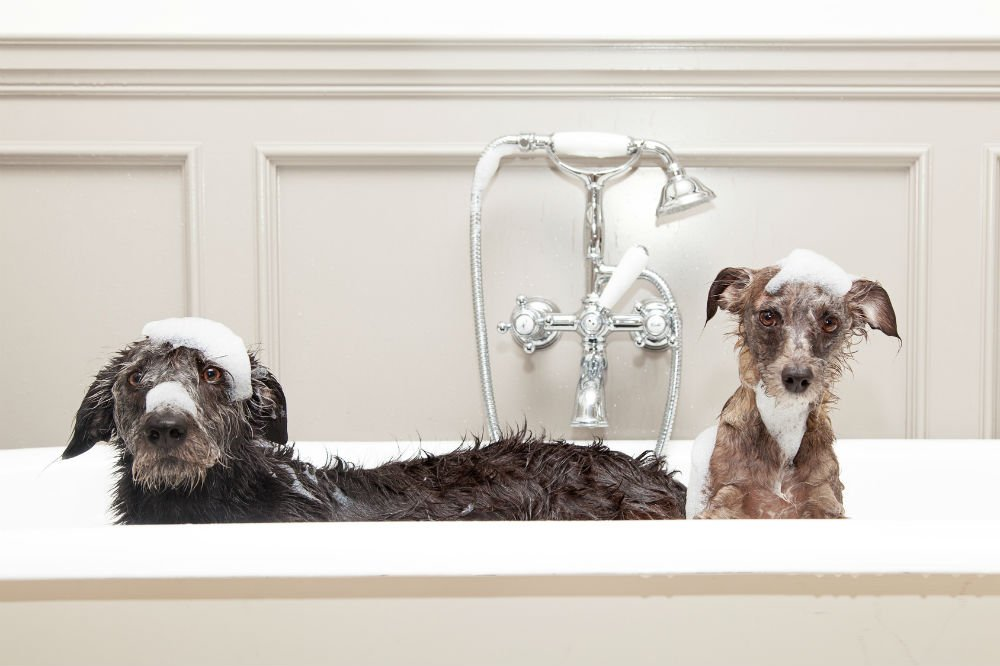 Fifi & Fido Oatmeal Dog Shampoo and Conditioner