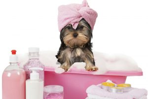 Is a Dog Shampoo Necessary?