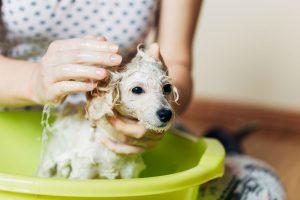 Isle Of Dogs Everyday Jasmine & Vanilla Silky Coating Shampoo – For Damage Protection Of Hair