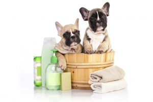 Pet MD – Antiseptic And Antifungal Medicated Shampoo For Dogs, Cats, And Horses For Healing Skin Infections