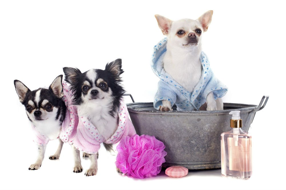Pet welfare 101 What shampoo can I use on my dog