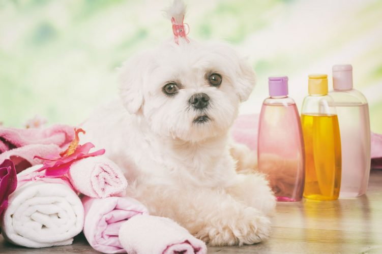 A Guide to Grooming and Bathing Dogs
