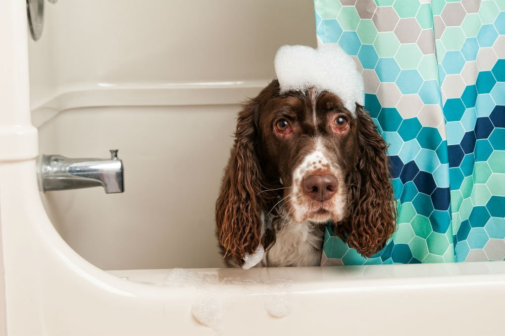 what you need to know when grooming your dog