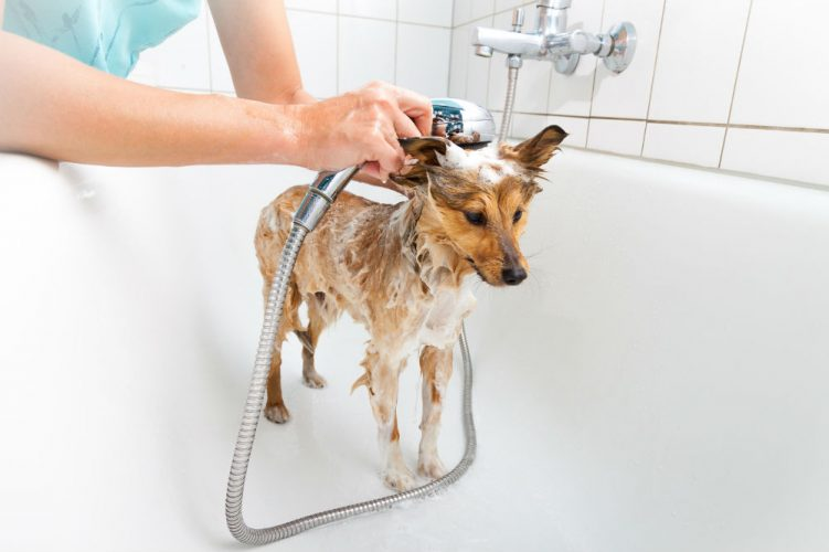 how to choose a dog shampoo