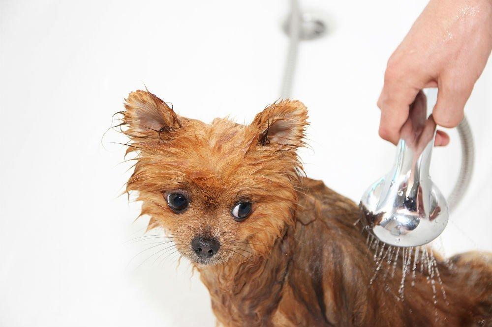 Curaseb Antifungal & Antibacterial Chlorhexidine Shampoo