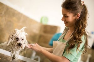 How Often should you Bathe your Dog with Flea Shampoo?