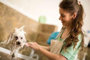 How Often should you Bathe your Dog with Flea Shampoo?
