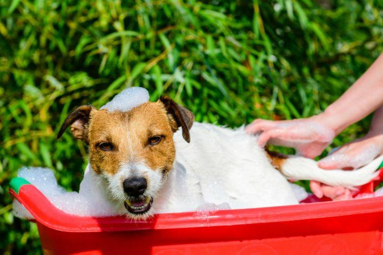 best hypoallergenic dog shampoo