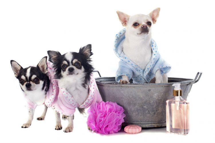 are dog shampoo and human shampoo the same