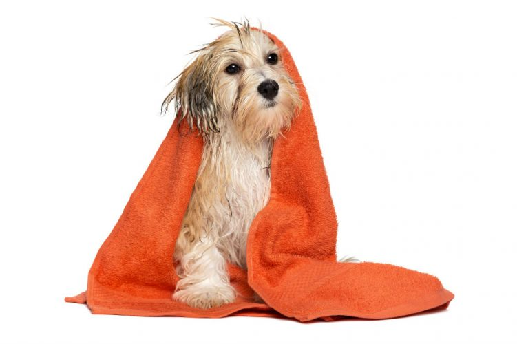 Natural homemade dog shampoo