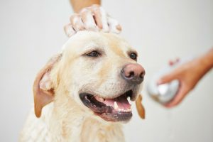 Medicated Dog Shampoo for Itchy Skin Reviews