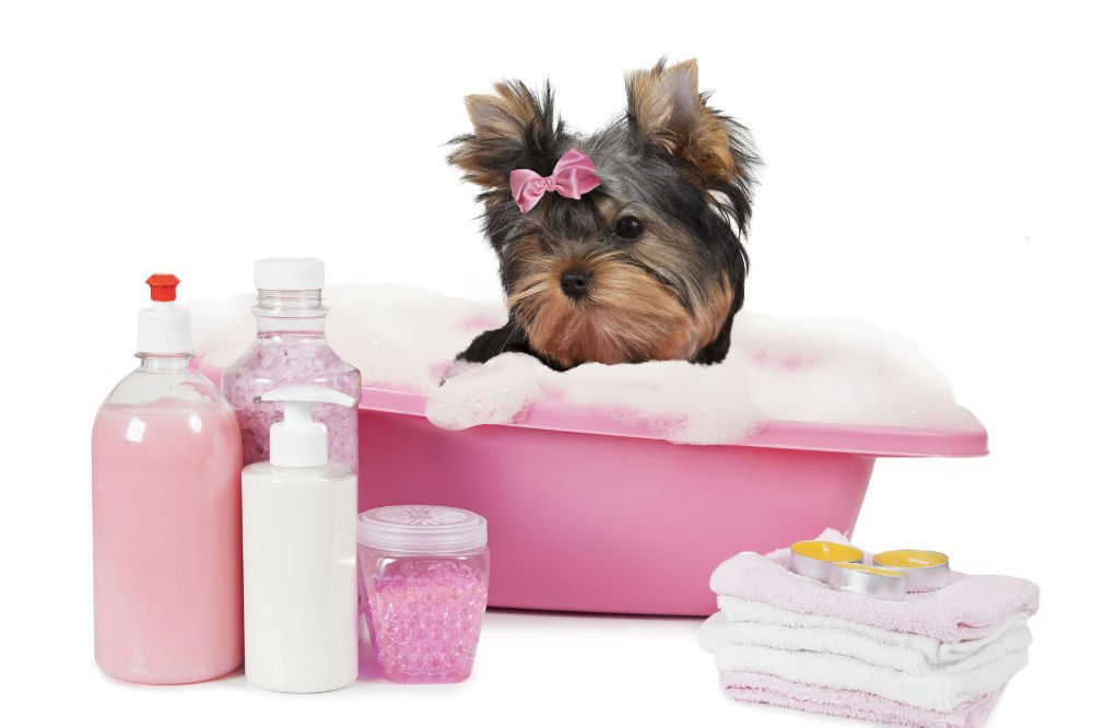 Top 10 best selling Dog Shampoo Brands