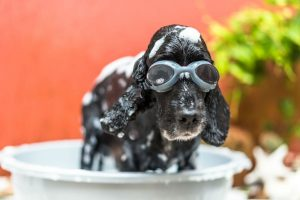 homemade dog shampoo ingredient guide