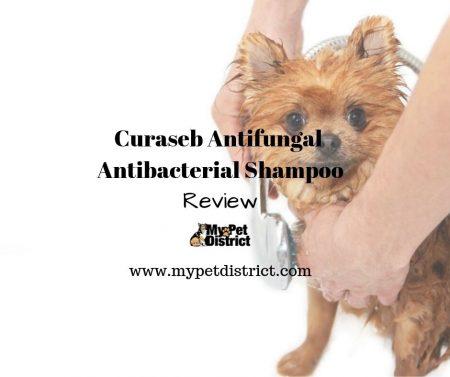 curaseb antifungal shampoo review