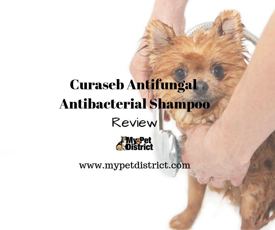curaseb antifungal