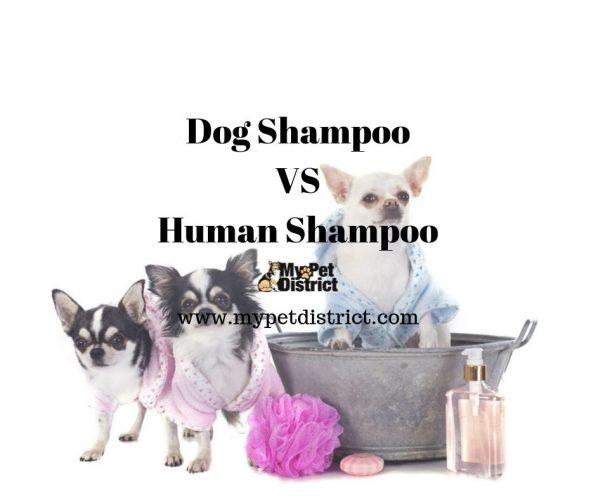 dog shampoo vs human shampoo
