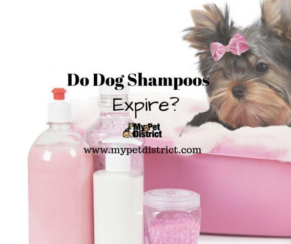 do dog shampoos expire