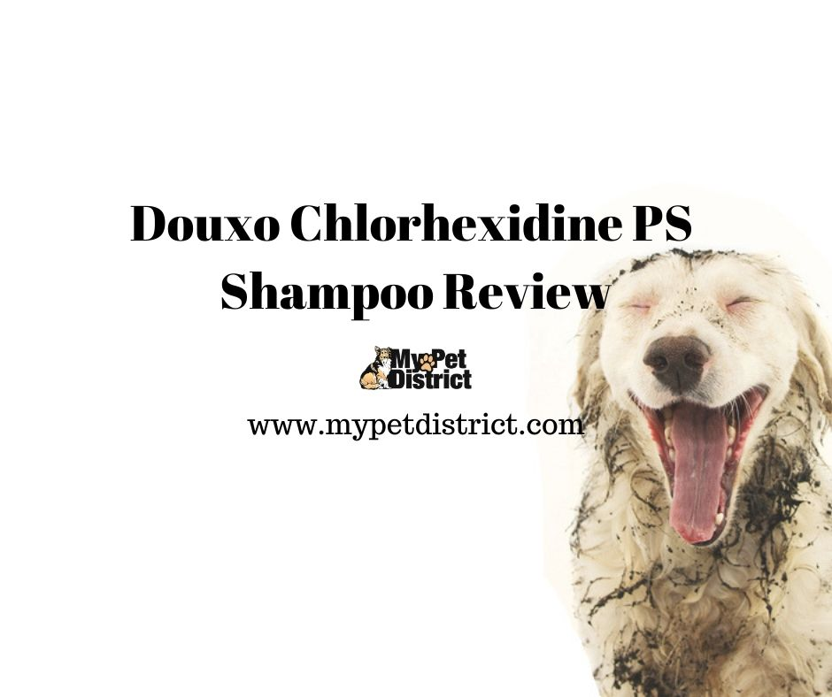 douxo dog shampoo review