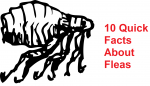 10 quick facts about fleas