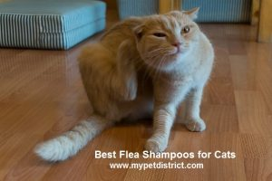 Top 4 Proven Best Flea Shampoo for Cats Reviews