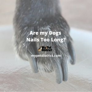 are my dogs nails too long