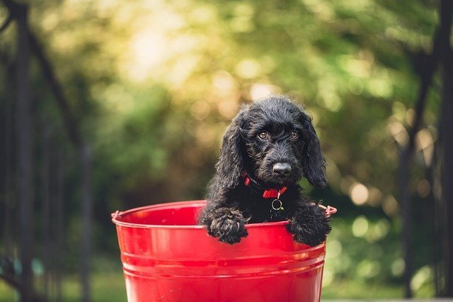 hypoallergenic shampoo for dogs