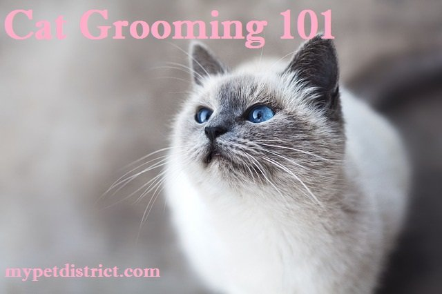 what is cat grooming