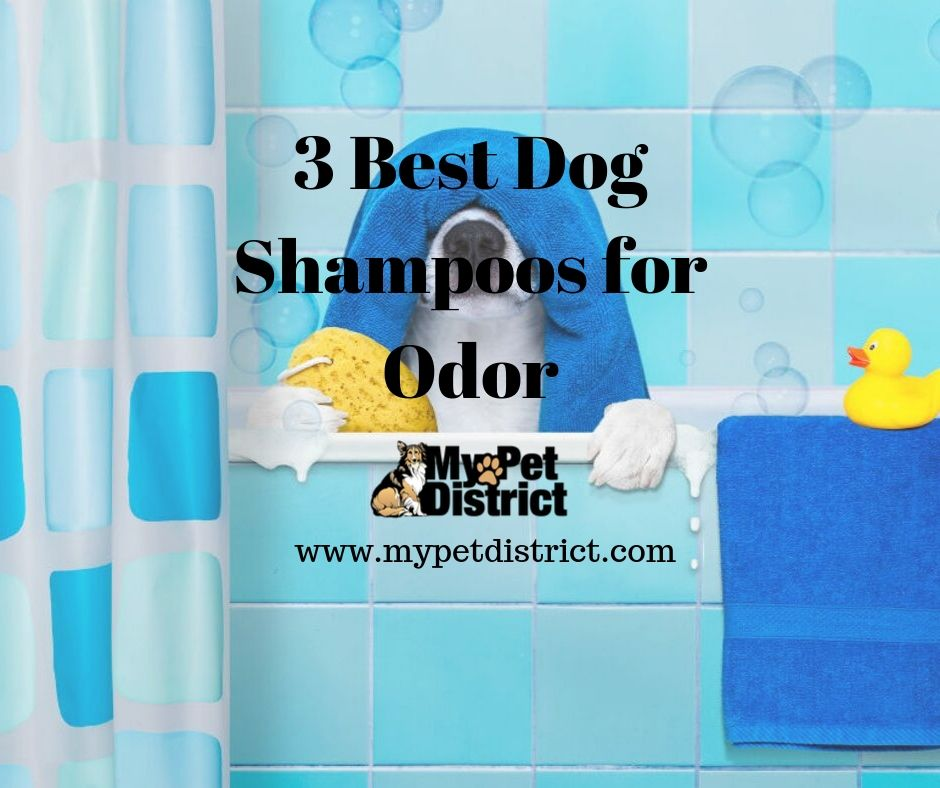 best dog shampoos for odor