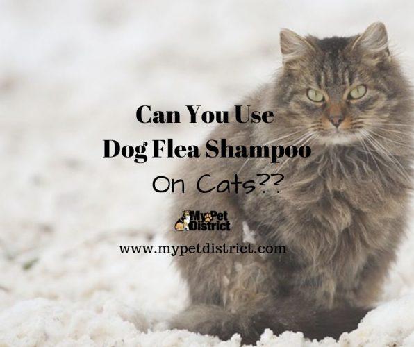 dog flea shampoo on cats