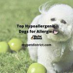 top hypoallergenic dogs
