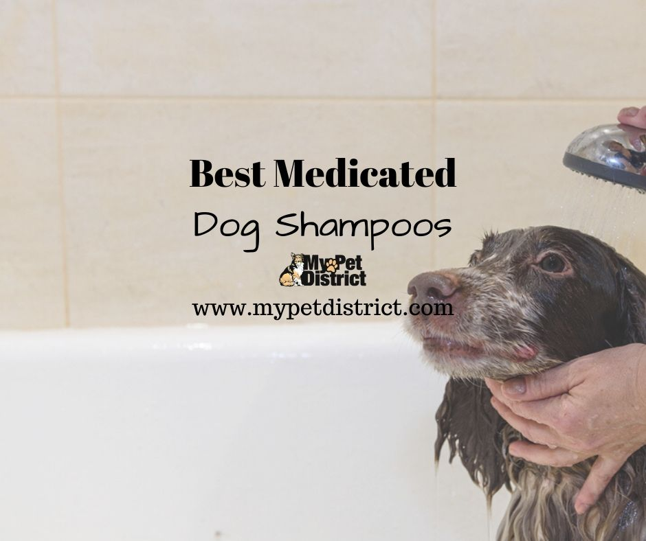 best medicated dog shampoo