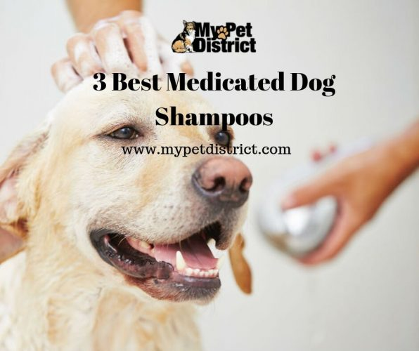 dog shampoo for itchy skin