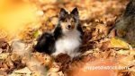 top autumn pet tips