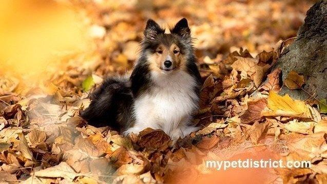 top autumn pet tips