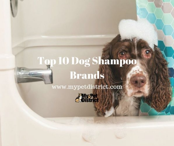 top 10 dog shampoos