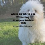 white on white dog whitening shampoo