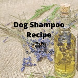 dog shampoo recipe