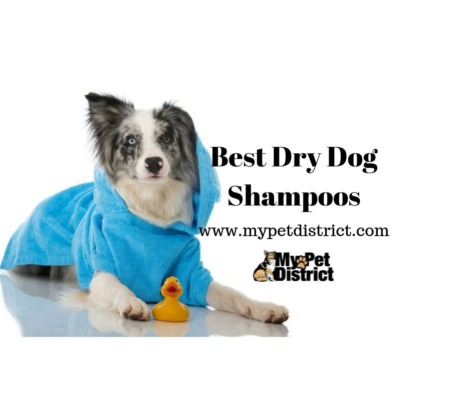 best dry dog shampoo