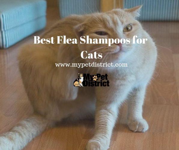 best flea shampoo for cats