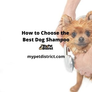 how to choose the best dog shampoo