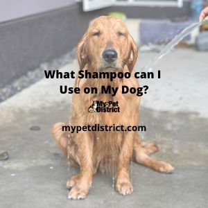 what shampoo can i use on my dog