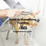 guide to shampoing a dog