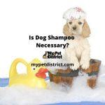 is dog shampoo necessary