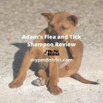adam's flea and tick shampoo review