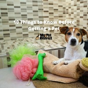 10 things to know before getting a pet