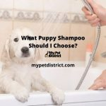 what puppy shampoo should I choose
